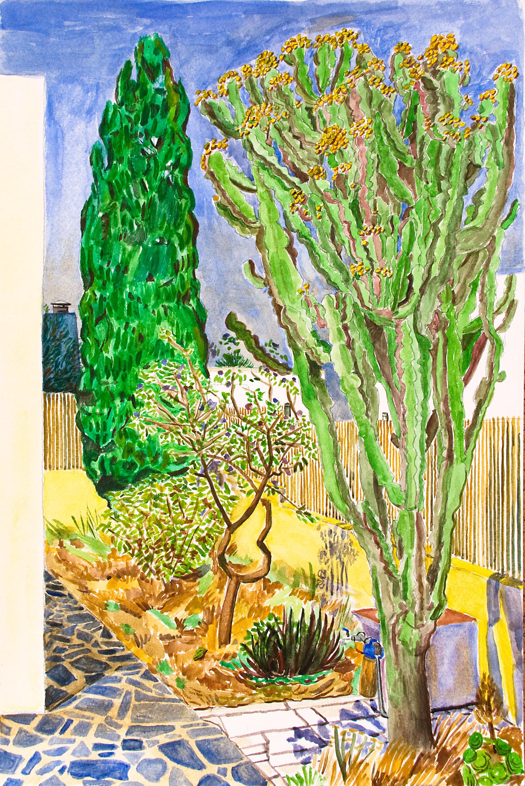 Cactus y ciprés
